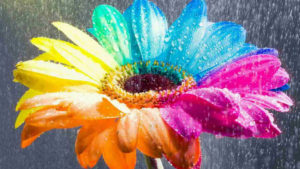 rainbow flower